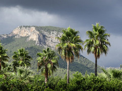 Mallorca has many exciting attractions for expats