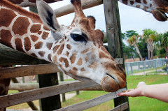 Safari Park in Bangkok is a popular attraction for expat kids