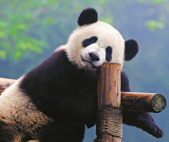 Chinese panda - frequently asked questions about moving to China