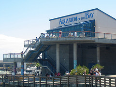 The famous Aquarium of the Bay in San Francisco